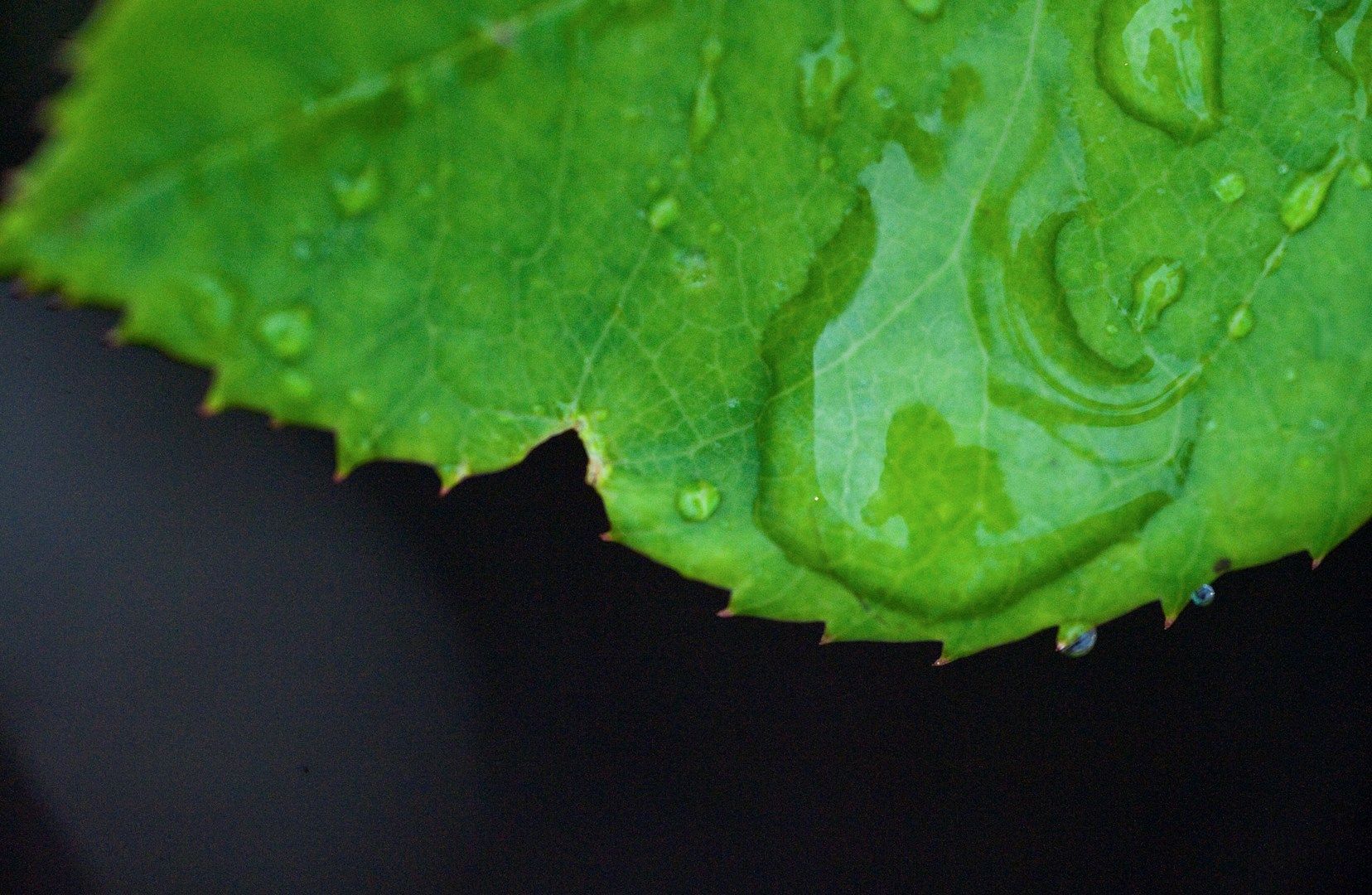 horiz_leaf with water drop