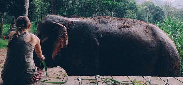 Student with elephant, on study abroad trip